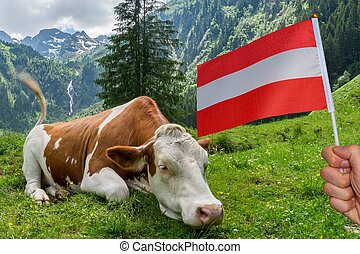 草, アルプス, あること, 牛, austria., 牧草地