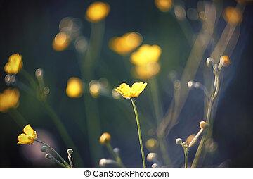 草, キンポウゲ, 黄色, 暗い, 中央, 花, 花