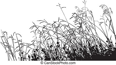 草, シルエット, 牧草地