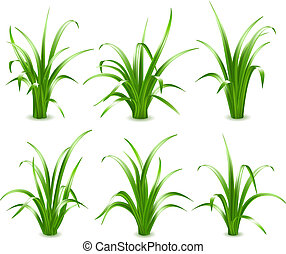 草, ベクトル, 緑