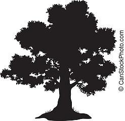 草, 侧面影象, 橡木树