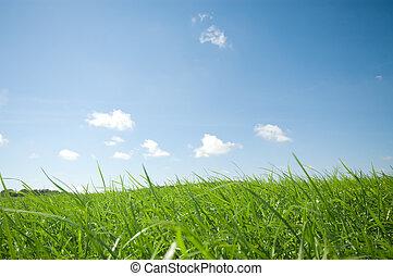 草, 同时,蓝色, 天空