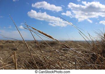 草, 天空, 背景, 海