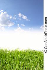 草, 天空, 背景