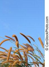 草, 天空, 花