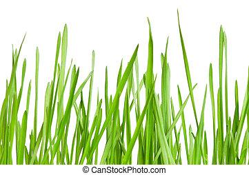 草, 小麥