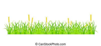 草, 小麦