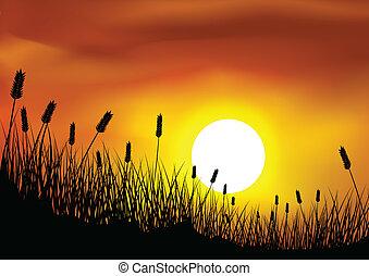 草, 小麦, 背景