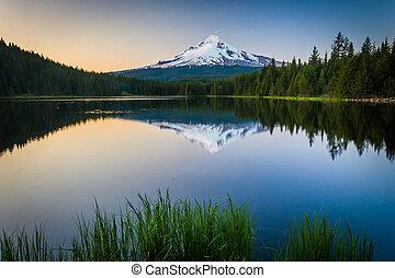 草, 建立, 湖, 傍晚, oregon., 森林, 反射, trillium, 國家, 敞篷