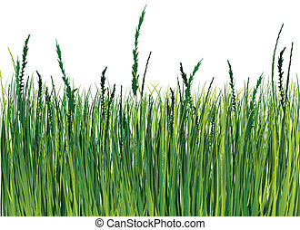 草, 插圖