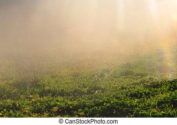 草, 日光