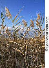 草, 沼地