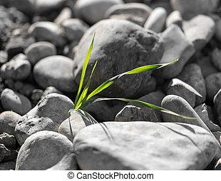 草, 生長, 在, 岩石