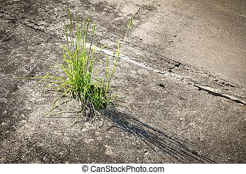 草, 生長, 在, 混凝土