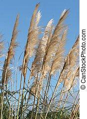 草, 砂丘