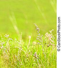 草, 緑の背景, ぼんやりさせられた
