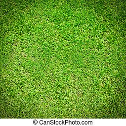 草, 緑, 手ざわり