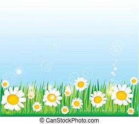 草, 緑, chamomiles