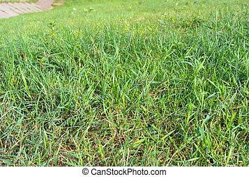 草, 绿色