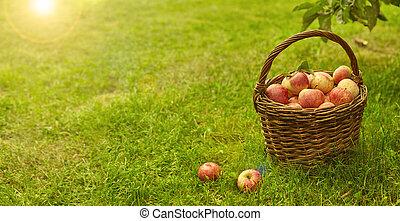 草, 绿色, 阳光, 有机, 篮子, 苹果, 健康