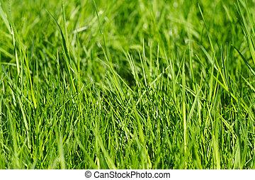 草, 背景