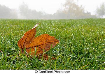 草, 葉, かえで