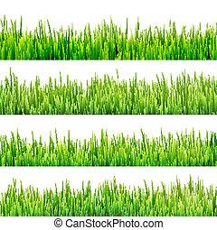 草, 隔離された, 上に, white., eps, 10