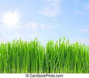草, 青緑, 空