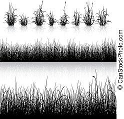 草, 黑色半面畫像, 被隔离, 在懷特上