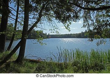荒地, 湖, 在中, 明亮, 阳光
