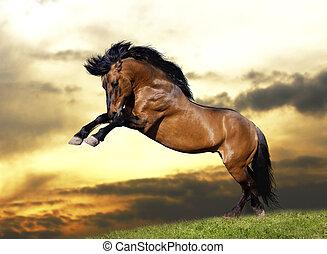 荒野, 公馬