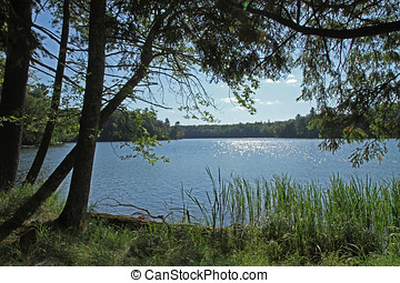 荒野, 湖, 在, 明亮, 陽光