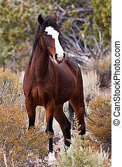 荒野, 範圍, 打開, 馬