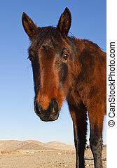 荒野, 野馬, 馬, 在, the, 內華達, desert.