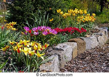 荒野, 鬱金香, 花圃