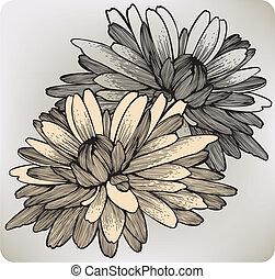 菊, 花, hand-drawing., ベクトル, illustration.