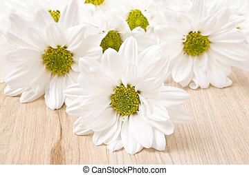 菊, 非常に, 浅い, -, フィールド, 深さ, 白