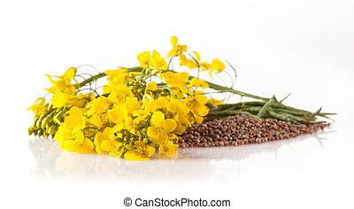 菜の花, そして, 種, 白, 背景