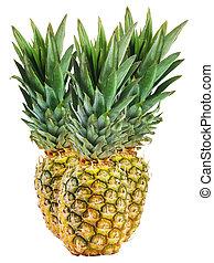 菠蘿, 被隔离