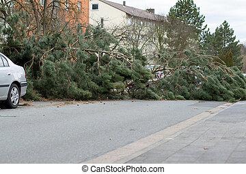 落ちている, 損害, 木, 嵐