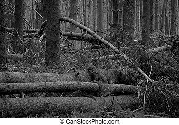落ちている, 森林
