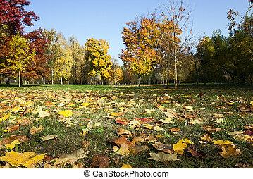 落ち葉, 公園, 木