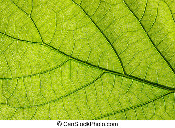 葉子, 綠色, 結構