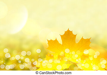 葉, かえで, 秋