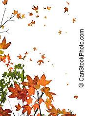 葉, かえで, 背景, 秋