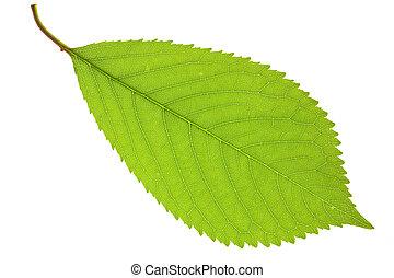 葉, さくらんぼ