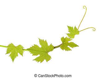 葉, つる