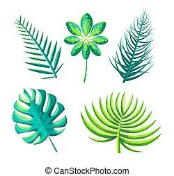 葉, の, エキゾチック, 植物, セット, ベクトル, イラスト