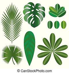 葉, の, トロピカル, plants., 隔離された, items., monstera, ficus, ヤシの木,...