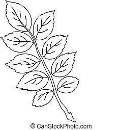 葉, の, dogrose, 輪郭